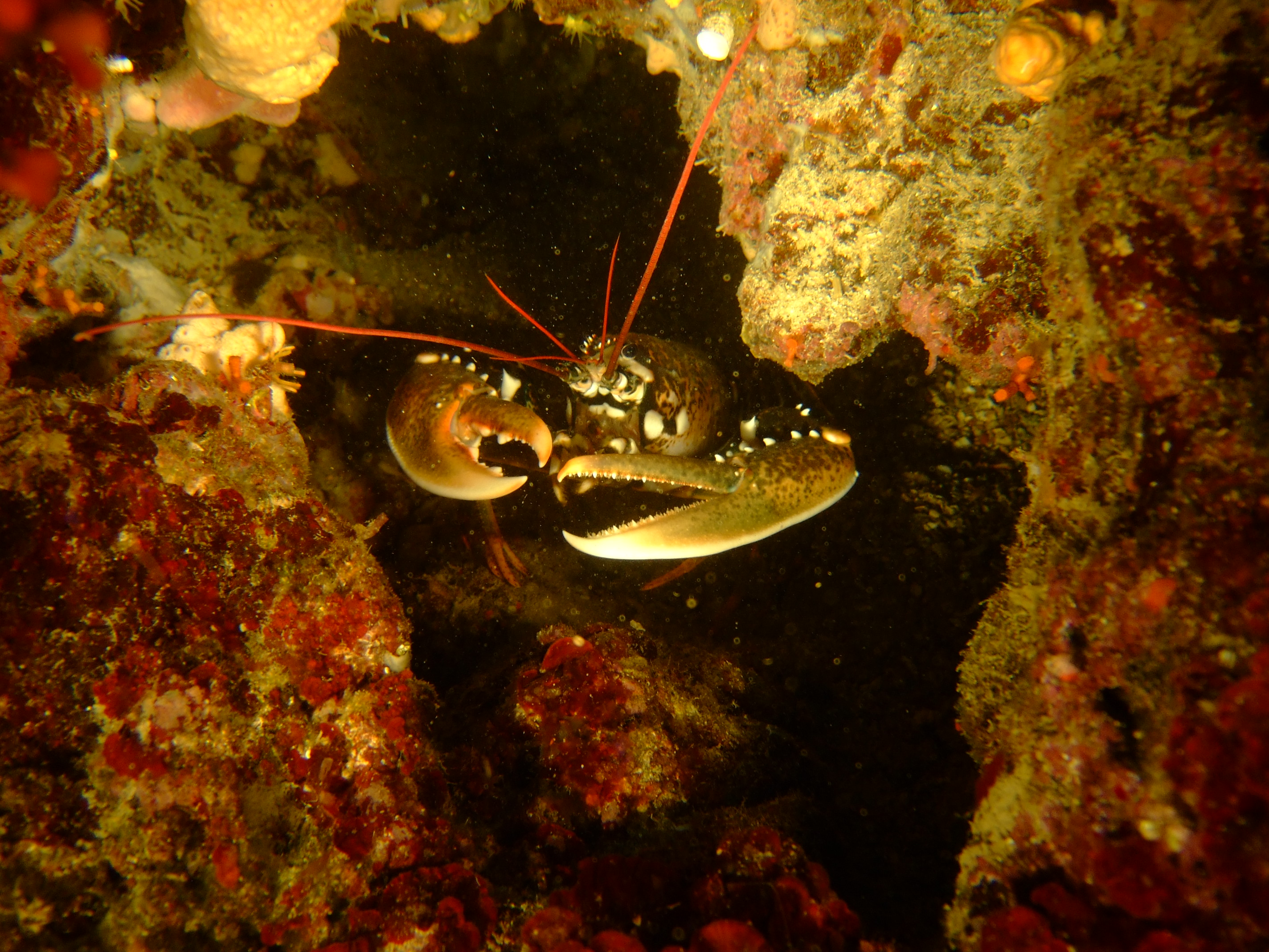 Diving Aquodiving Tremiti