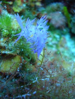 Diving Aquodiving Tremit