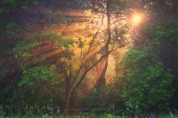 Morning-Rays_Final_skylight-copy