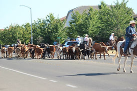 Cattle Drive 2014.jpg