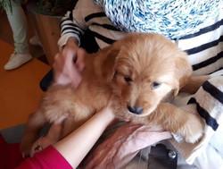 puppy naar Magnushof 9-4-2019 www.sticht