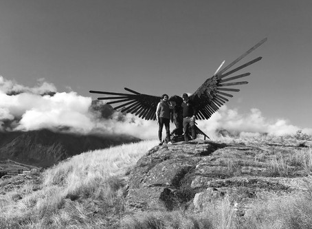 Jacks Point NZ eagle