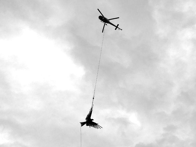 Dan Kelly Sculpture - Jacks Point NZ eagle