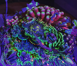 Recycled Reef - UV Light