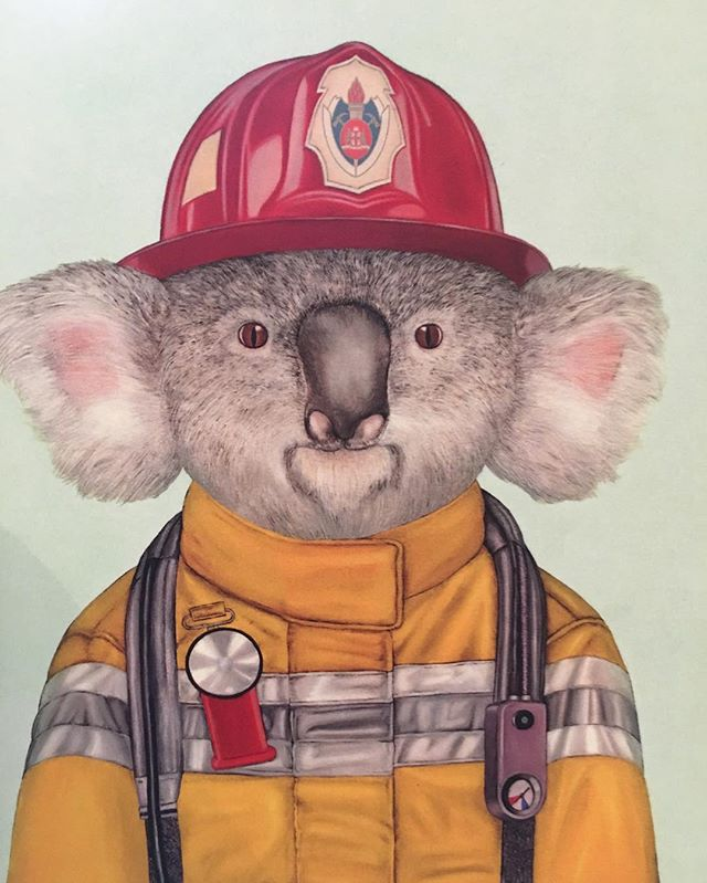 N E W __ Fireman Koala notebooks, cards and posters have just arrived at Mac and Morgan! #lalaland #
