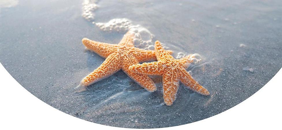 NZLCA Conference 2021 starfish 1000px.jp