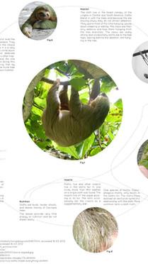 Biophile-architecture-Maria-Knutsson-Hall-Sloth-itecture-05.jpg