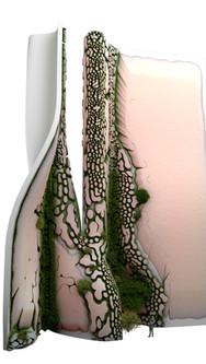 Barry Wark Biophile architect biophilic houdini digital architecture complexity form nature  (38).jpg