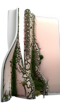 Biophilic Aesthetics