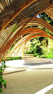 Timber Bifurcations