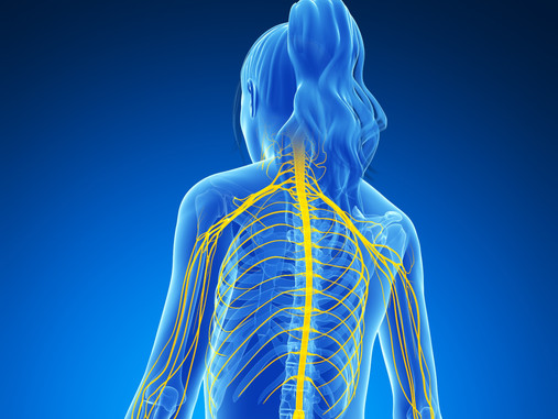 How To Understand Nervous System Function, Misfires & Remedies