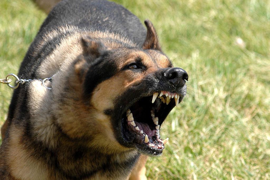 New Client Consultation- Aggressive Dog