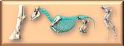skelett.png