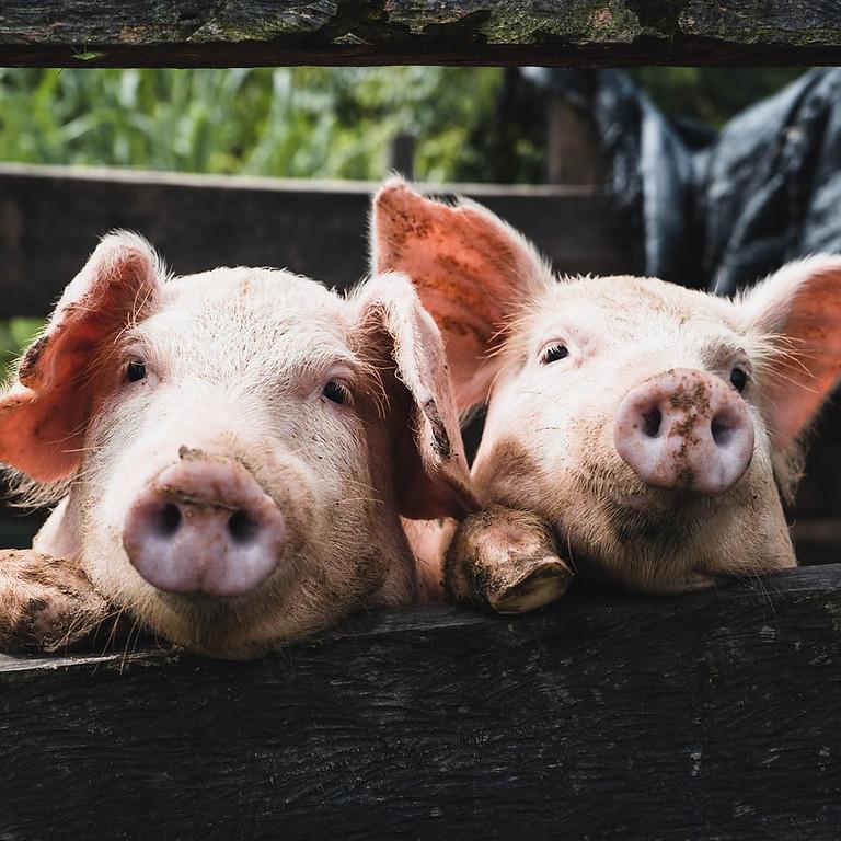Little Pig - Miss Piggy