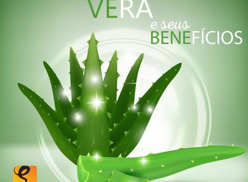 Os benefícios do uso da Aloe Vera ou Babosa em seus cabelos