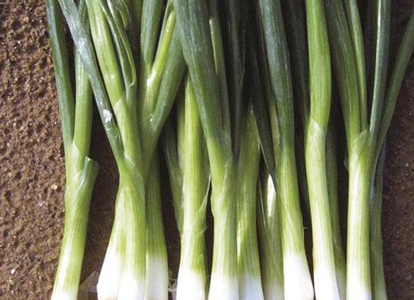Green Banner Bunching Onion