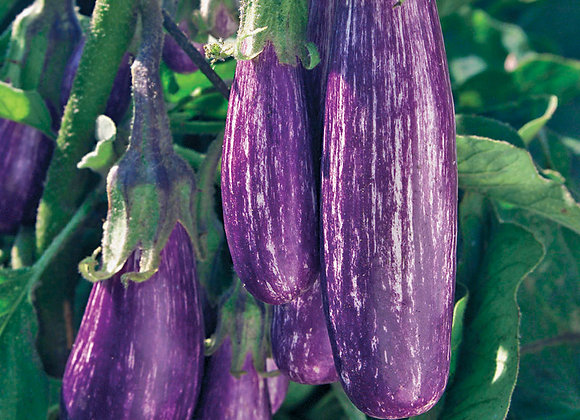 Eggplant Fairy Tale