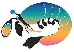 mantis shrimp image.PNG