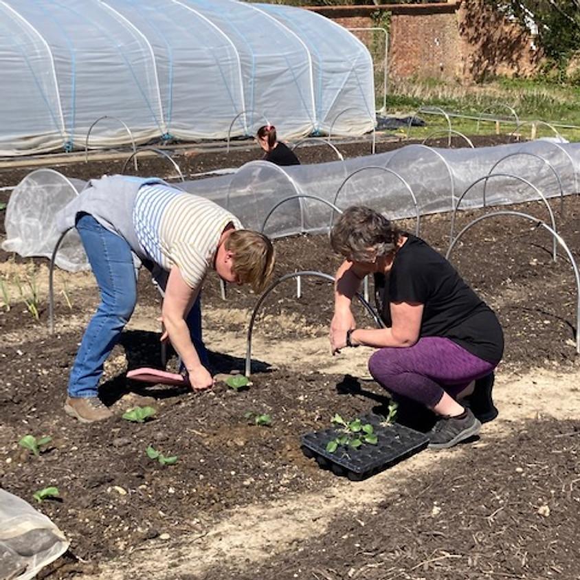 Volunteering Opportunities at Hope Farm Walled Garden, Hawkhurst