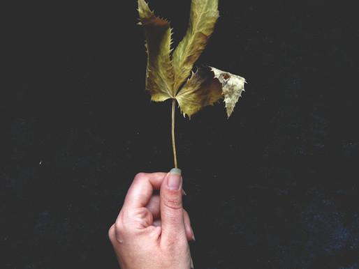 LISTE DE LECTURES RECOMMANDÉES SUR LA MAGIE VERTE ET LA VOIE DU POISON