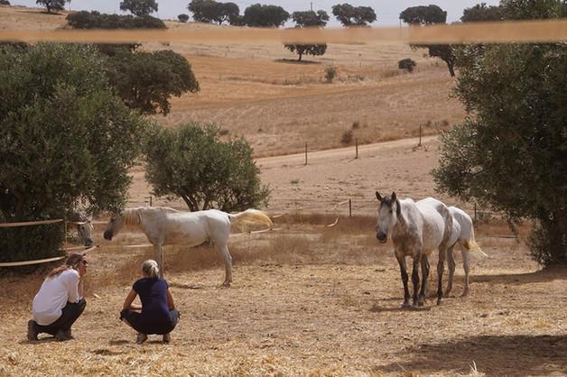 Beobachtung der Herde