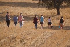 Wandern durch die Herde