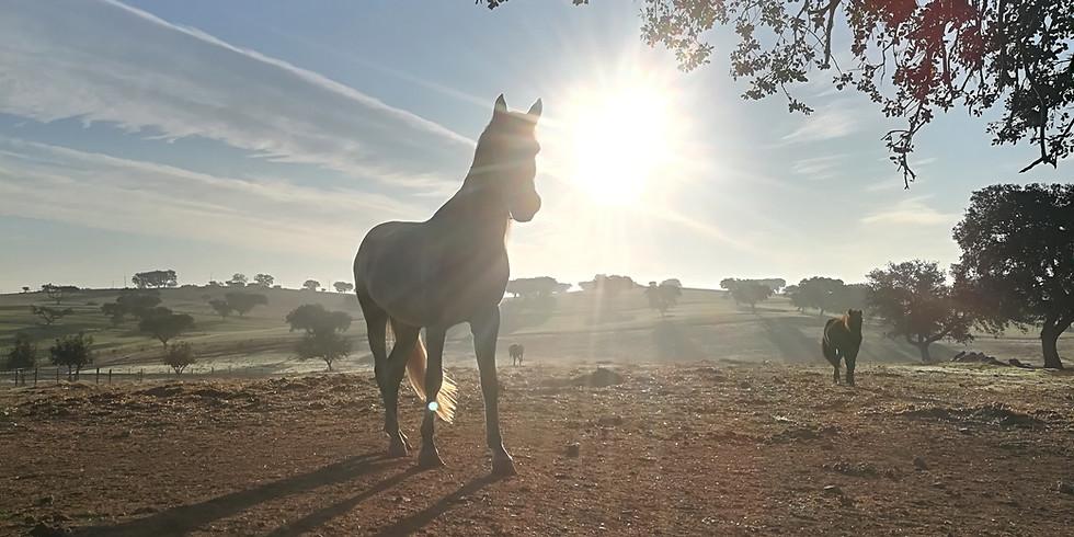 """Retreat """" Seelenzeit mit Pferden"""" - Finde in dein Herz und deine innere Balance zurück"""