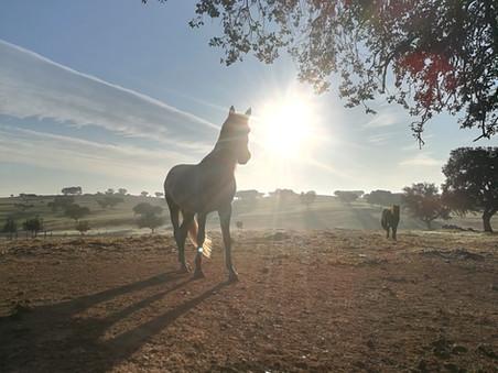 Das Licht der Pferde