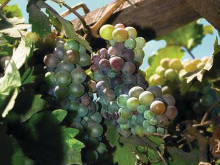The Vineyard Parable