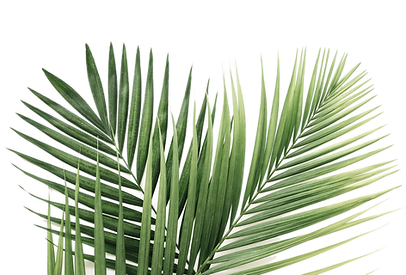 palm leaves-min.png