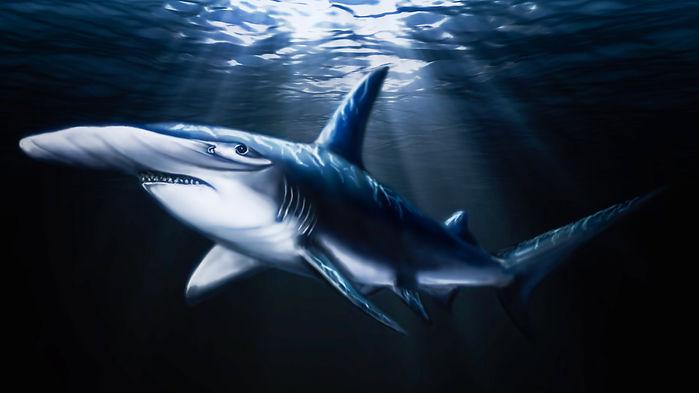 shark hammerhead.jpg