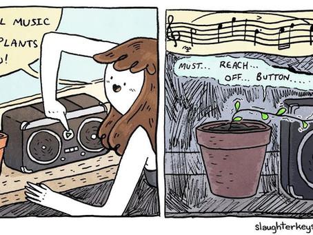 Plants love classical music?!