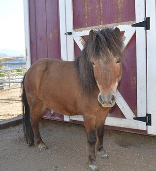 HORSES_Tucker.jpg