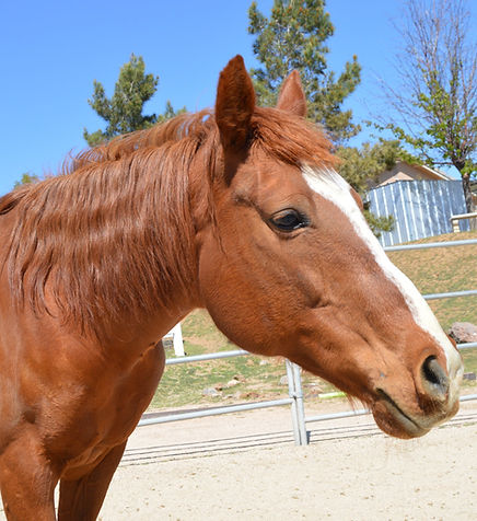 HORSES_April.jpg