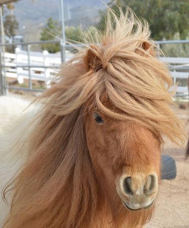 HORSES_Shorty2.jpg