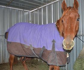 HORSES_Topper3.jpg
