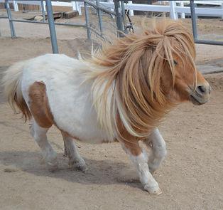 HORSES_Shorty.jpg
