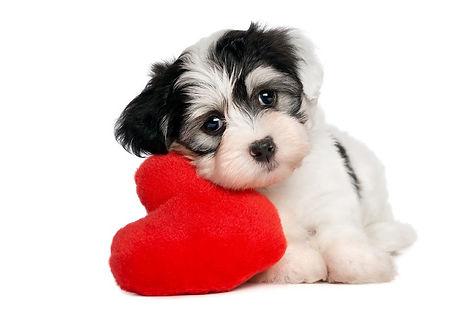 dog love 2 .jpg