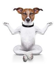 meditação_com_animais_animal_pet_pau
