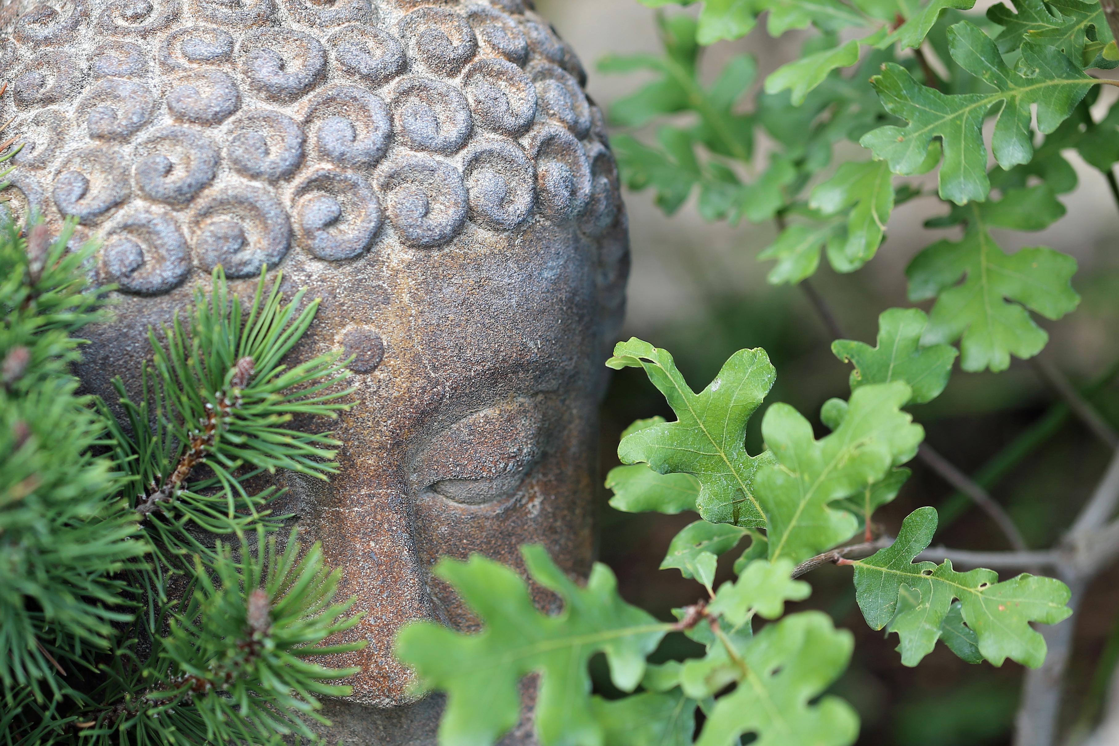hidden buddha
