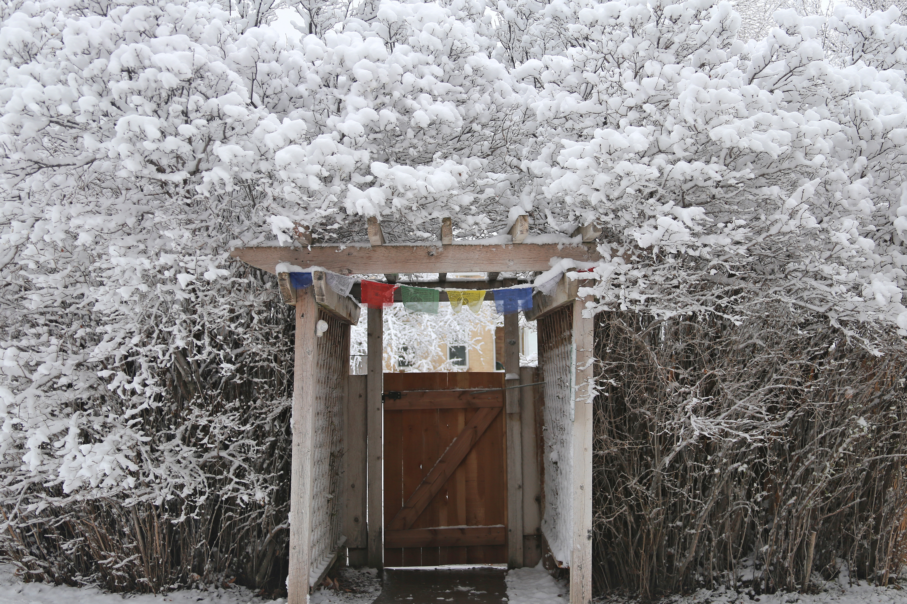 snow covered arbor 12-2015