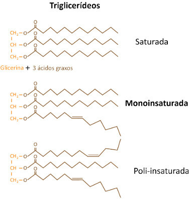 A diferença entre as gorduras