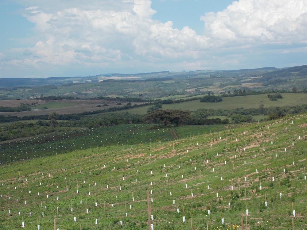 Pomar da Fazenda São Jorge, Encruzilhada do Sul
