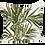 Thumbnail: Hamptons Palm