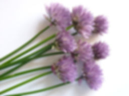 chive flower - Copy.jpg