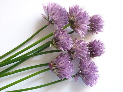 chive flower - Copy.jpg