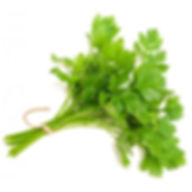 parsley-continental-bunch.jpg