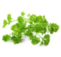 chervil french parsley.jpg
