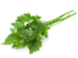 italianparsley.jpg
