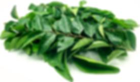 curryt leaf.png